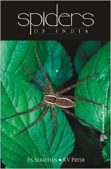 spider of India